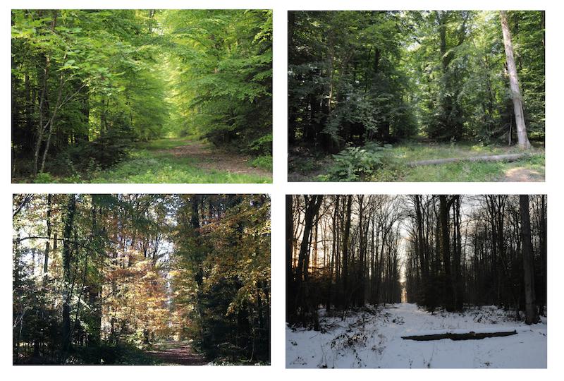 Du printemps à l'hiver. Les 4 saisons vues au même carrefour des Fontenelles, dans la forêt de Réno.